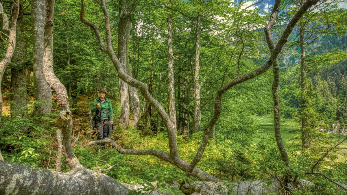 Wer weiß heute noch, wie ein Wald wirklich aussieht?